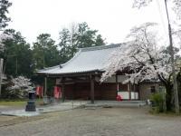 長楽寺の桜