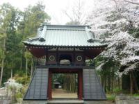 太鼓門の桜