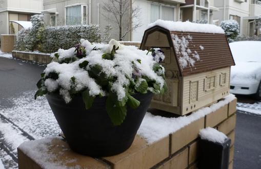雪をかぶったパンジー