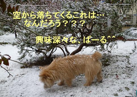 初めての雪P3