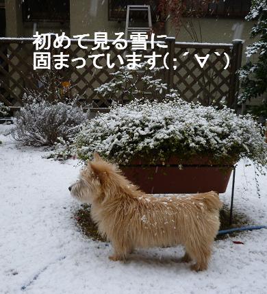 初めての雪P2