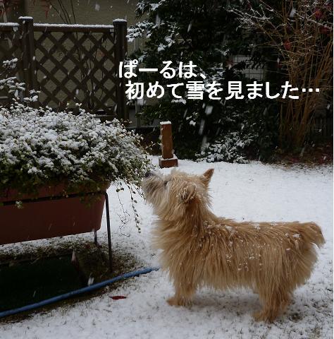 初めての雪P