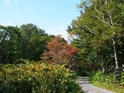 early autumn (1) (400x300)