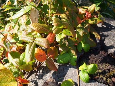 early autumn (3) (400x300)