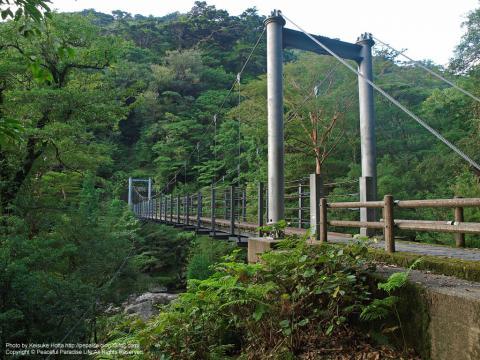 屋久島 白谷雲水峡4 さつき吊橋