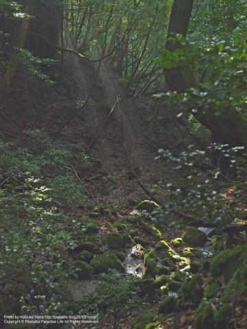 屋久島 白谷雲水峡8