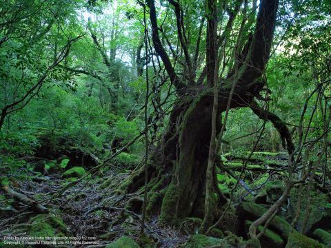 屋久島 白谷雲水峡 ファンタスティックな絶景