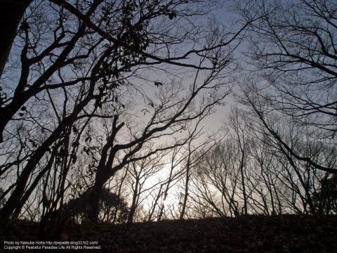 久良岐公園の林と夕日