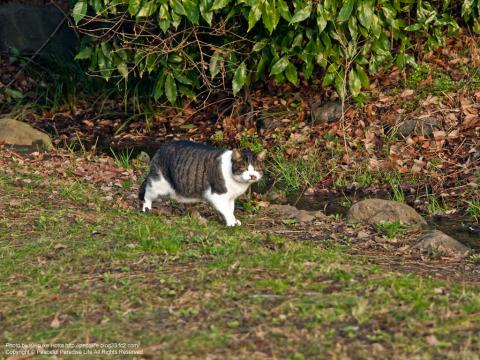 久良岐公園の猫