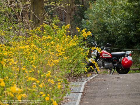 黄色い花とバイク