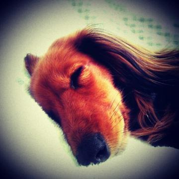 お昼寝ミッキー