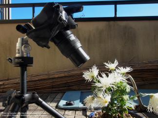 50mm F2.0 Macro + EX-25