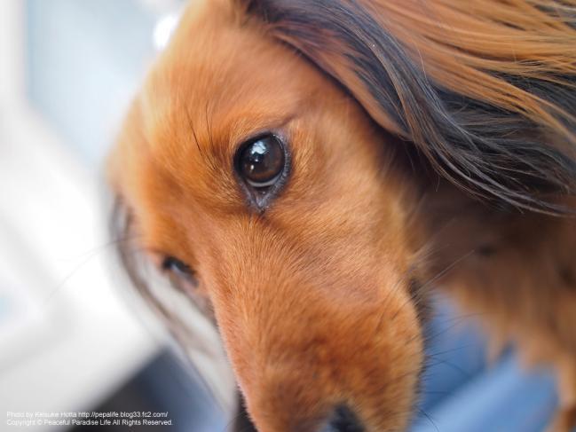 E-P3 絞り優先(A)モードの試し撮り写真1 犬の顔