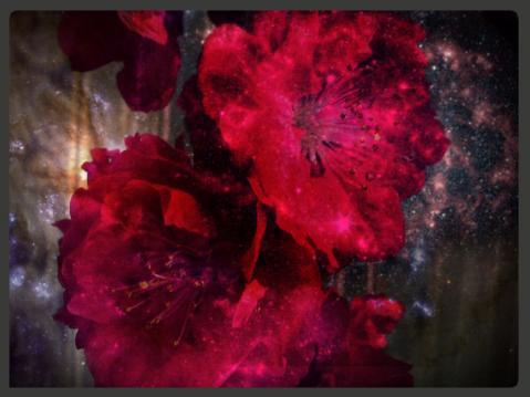 邪悪な桃の花