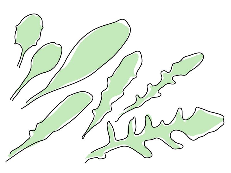 オオジシバリ 葉の色々