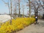 20110413花見(多摩湖) (6)-1