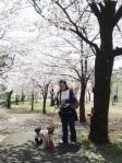 20110413花見(多摩湖) (18)-1