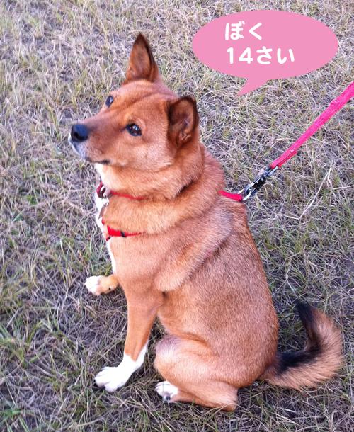12-21-1_20111221202832.jpg