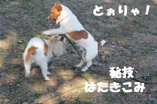 Battle-1