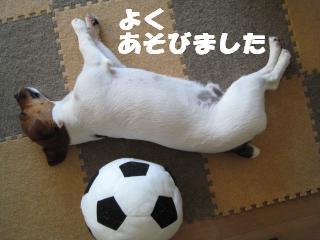 ボールと昼寝