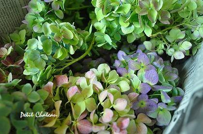 秋色紫陽花