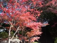 1312-kyoto11.jpg