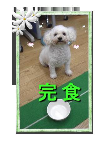CIMG4603_01sc.png