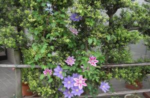 flower3565_sc.jpg
