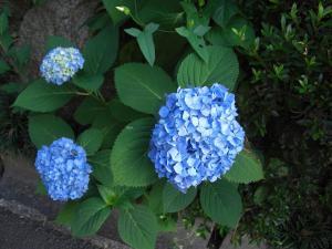 flower4004_sc.jpg
