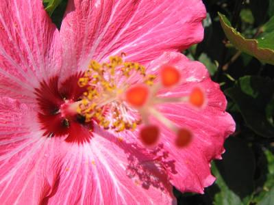 blog_import_4c389474e7070.jpg
