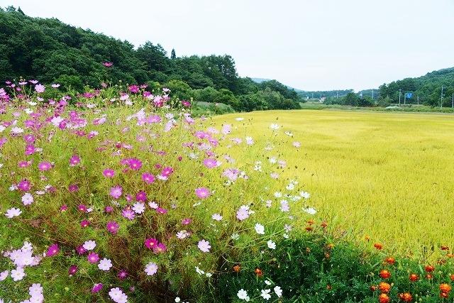 北広島の秋17