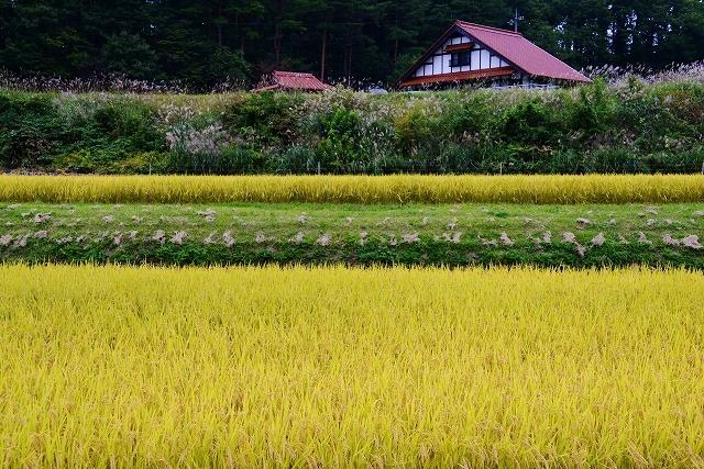 北広島の秋 1