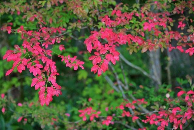 北広島の秋 11