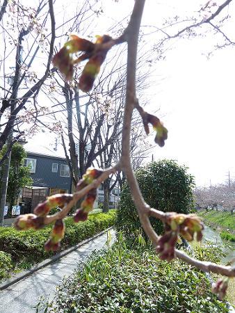 ぶろぐ2012 no.17 001