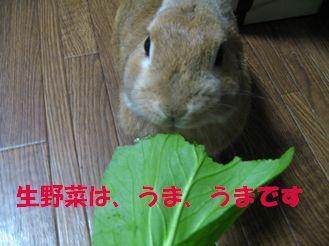 pig 20120312 001