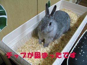 sa-ko 20120322 001