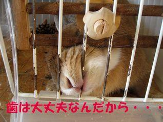 pig 20120327 001