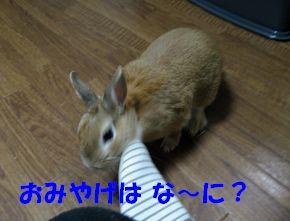 pig 20120404 001
