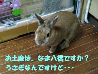 pig 20120409 001