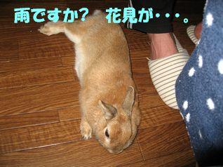 pig 20120413 001