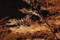 東寺ライトアップ 004