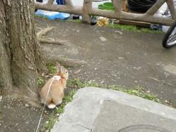 pig 20120415 002