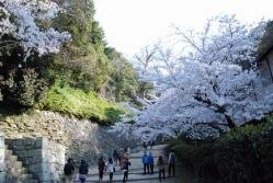 wa.和歌山城 裏坂の桜