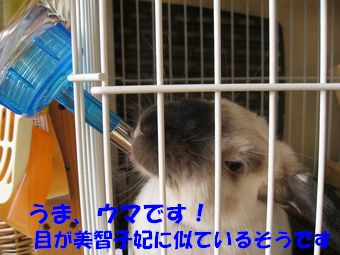 sakura 20120418 001