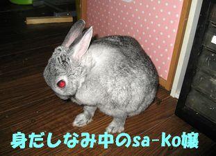 sa-ko 20120422 001