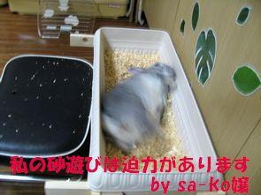 sa-ko 20120427 001