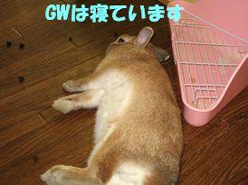 pig 20120502 001
