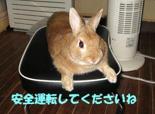 pig 20120504 001