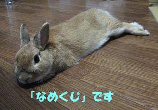 pig 20120510 001