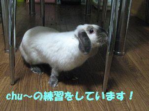 sakura 20120518 001